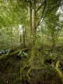 A forest a day … when will the logging of our spectacular forests actually cease?