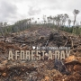 'A forest a day' project compiled in newreport!