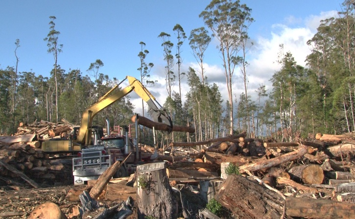 Current logging in World Heritage nominated Butlers Gorge