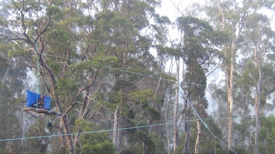 Butlers Gorge tree sit 1 (2)