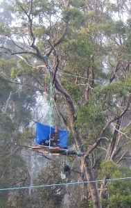 Butlers Gorge tree sit 1