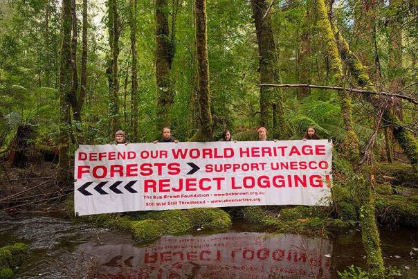 defend world heritage forest pic